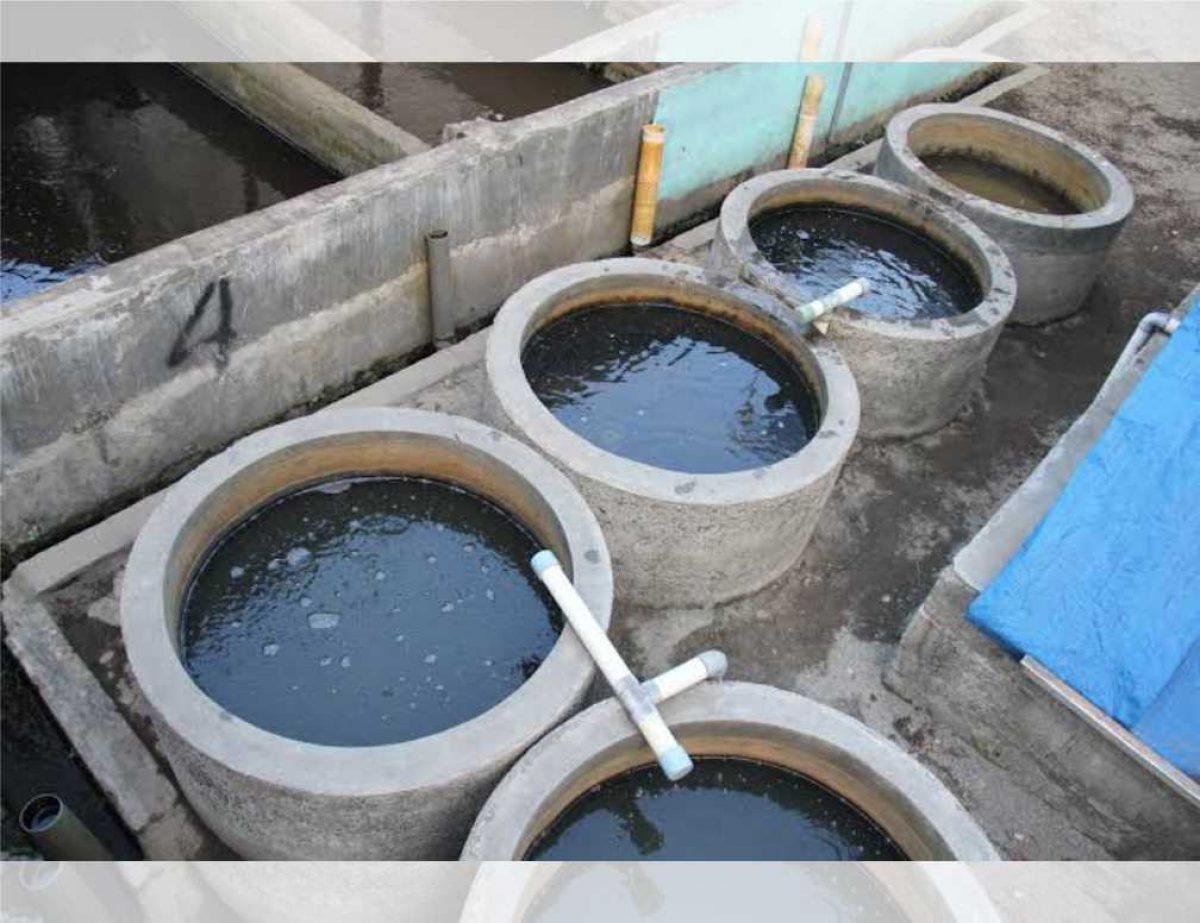 Panduan Cara Membuat Kolam Lele Dari Buis Beton Atau Gorong Gorong